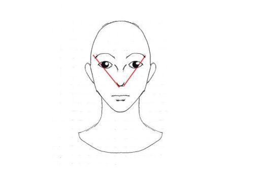 顔の黄金比 小鼻と眉
